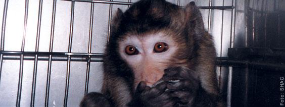 Tierversuchsstatistik Schweiz 2011 - Die Statistik ist eine kleine Mogelpackung - Medienmitteilung der AG STG